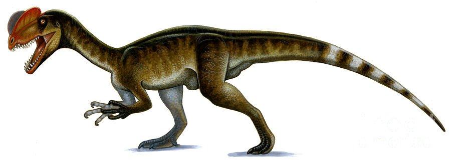 Dilophosaurus wetherilli Jurassik park crítica