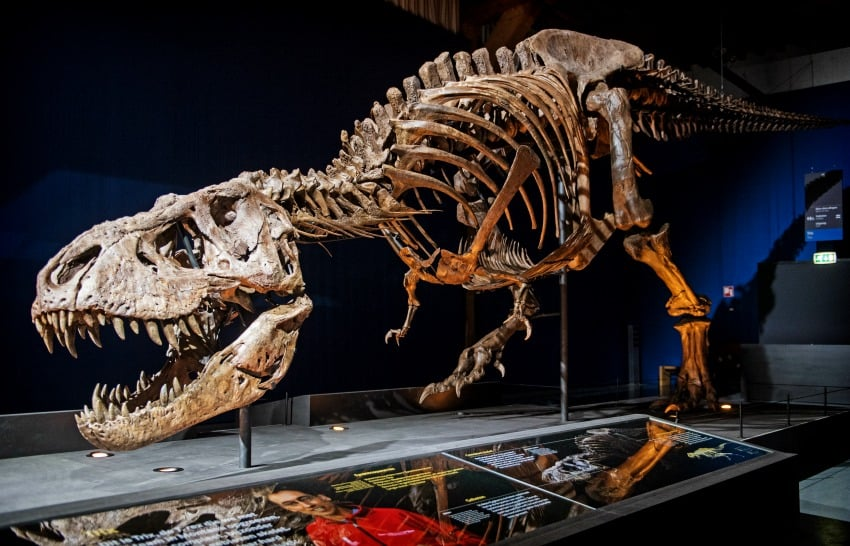 Jurassik park esqueleto de Rex
