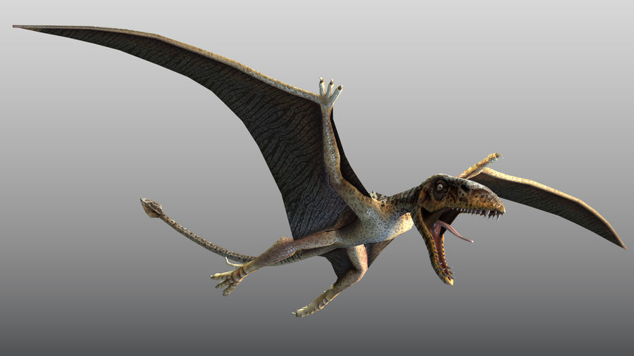 Pterosaurio Dimorphodon