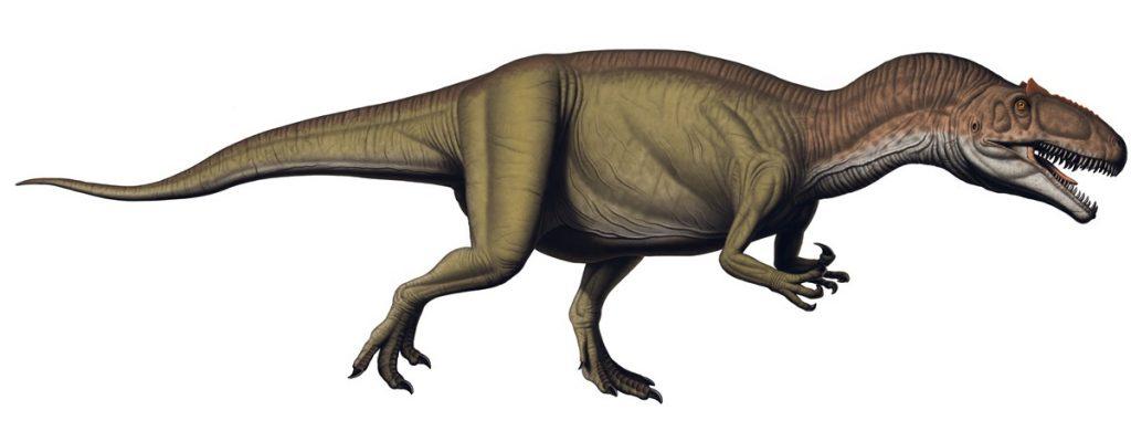 Especies de Dinosaurios completas.